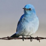 Twitter marketing Vancouver - bird