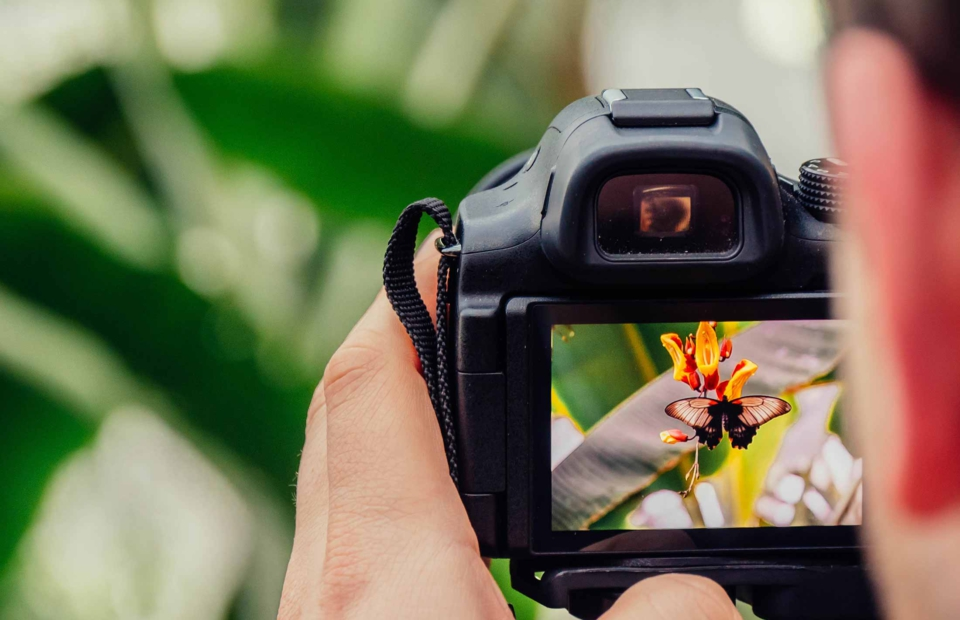 Photographer looking at camera display