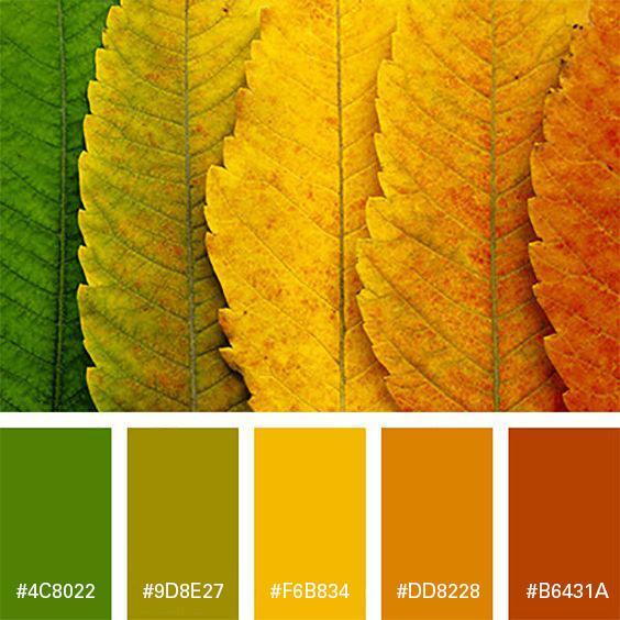Branding Colours For Fall