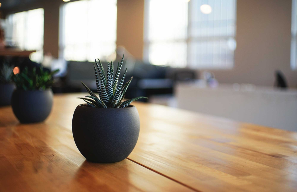 Inside a marketing office, plant on table
