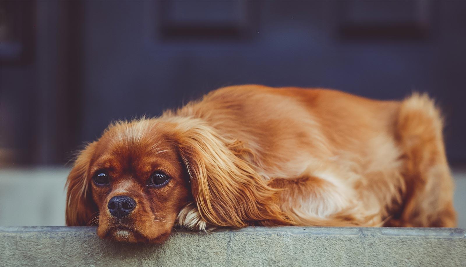 sad_dog_metaphor_sucky_marketing_client