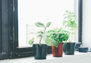 Plants in office windowsill