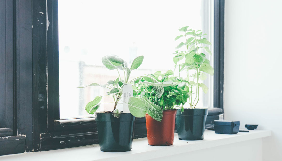 Plants in windowsill