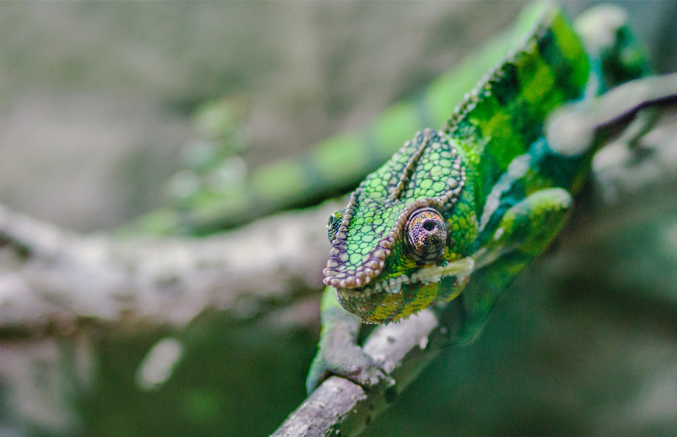 chameleon metaphor for google ads