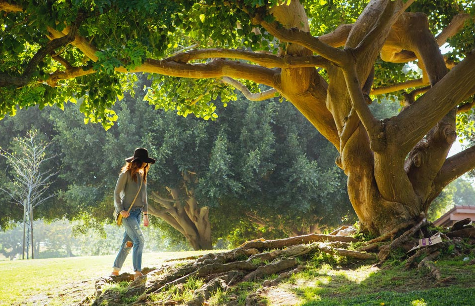 SEO are the roots of a website metaphor with a growing tree