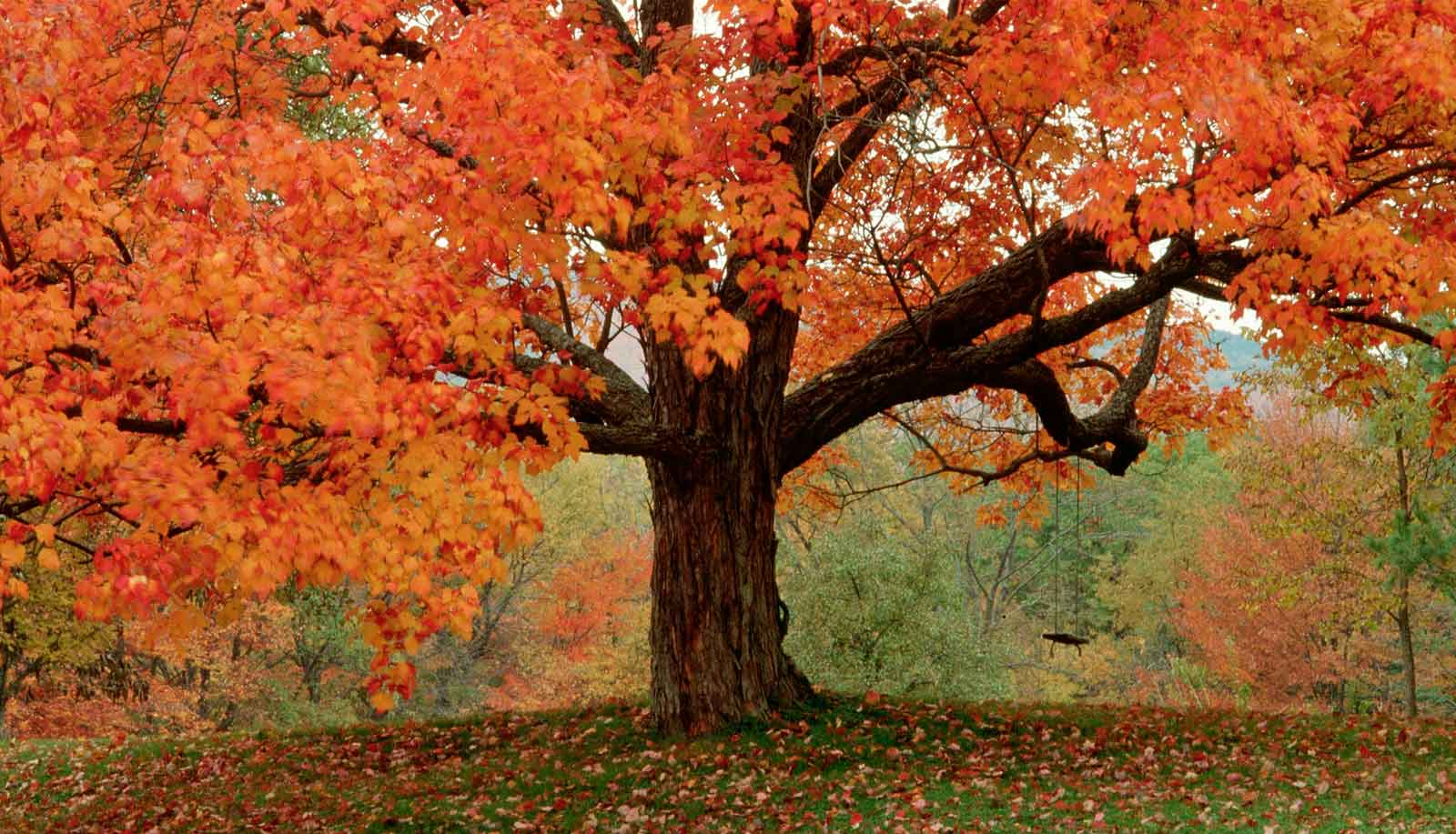 fall trees signify a time for change