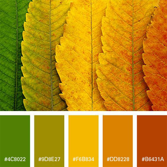 Branding Colours For Fall