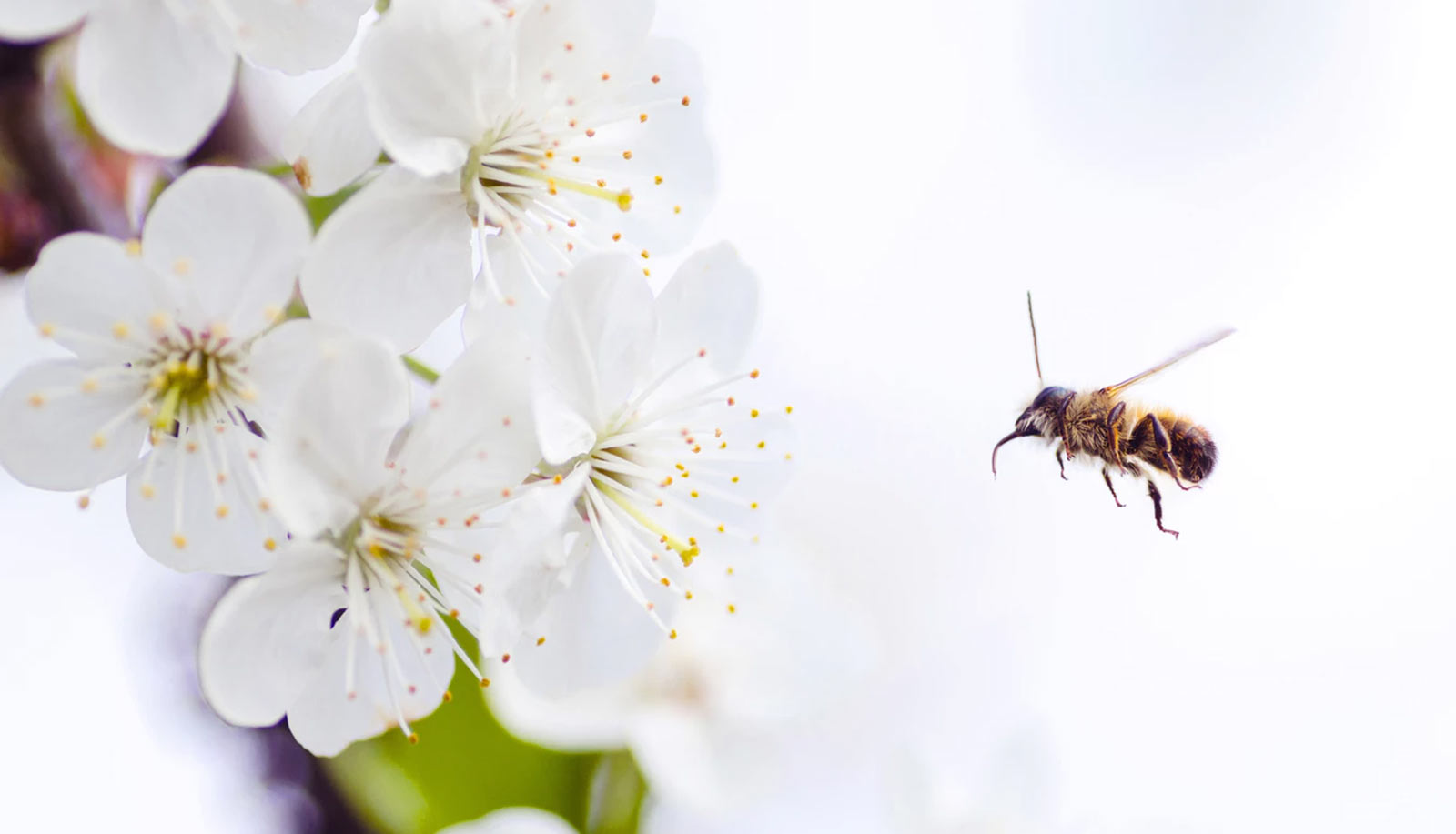 web design research symbolized by a bee pollinating flowers