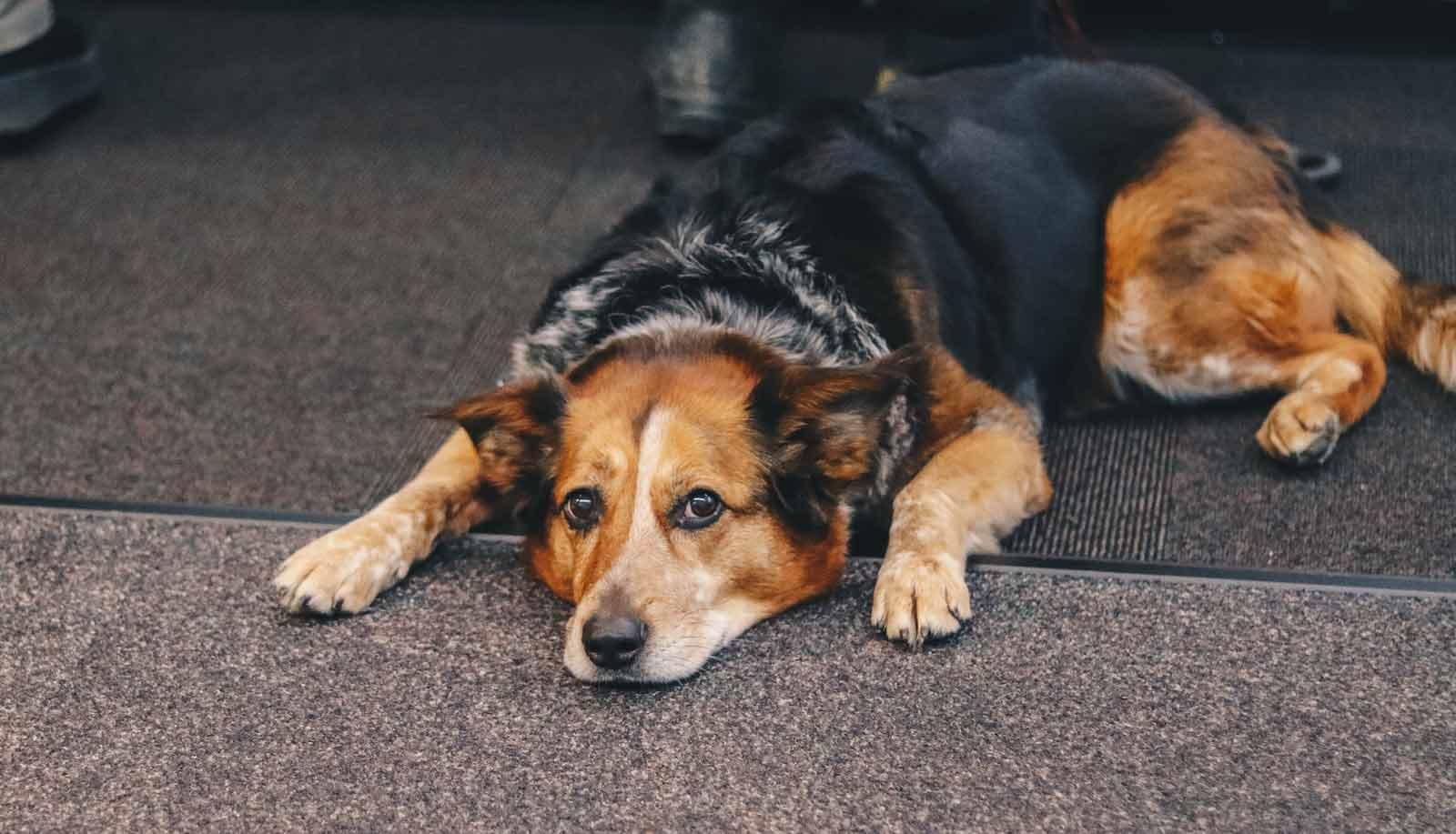 sad dog lying on ground